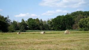 Kurzgemähte Wiese mit runden Strohballen, im Hintergrund ist ein Wald und blauer Himmel zu sehen.
